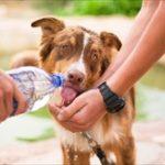 犬の室内飼いで暑さ対策を!夏のエアコンと停電を考えた工夫