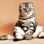 ハッカ油で猫に危険な影響が!中毒症状が猫の肝臓に直撃する!!