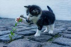 猫よけ対策